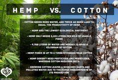 Hemp Vs Cotton: Cotton Fibers = 1 - 2 mm vs. Hemp Fibers = 4 - 5 meters. Stronger than cotton and was the original material for Levis Strauss jeans. Softer, war