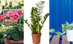 11 vanliga krukväxter –så sköter du dem!