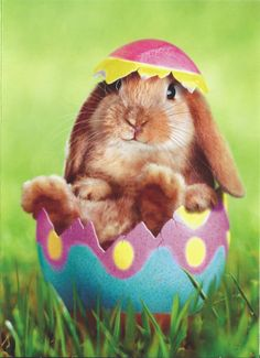 Happy Easter to all, May your day be blessed, wonderful, great and safe.  To those who wish the Easter Bunny, a fast and safe journey to Heaven, happy hunting.