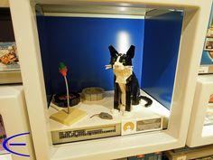 My Cat Cooper in LUG Showcase