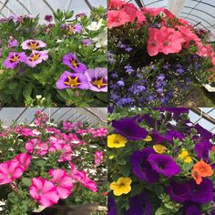 Everyone's ready for summer parties. is your patio? Dress your deck in a hurry with gorgeous PW 'Foolproof' Series Hanging Baskets! Summer Parties, Hanging Baskets, Deck, Gardening, Patio, Country, Plants, Fall Hanging Baskets, Terrace