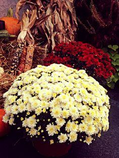 Fall flowers here at DelightedHome.com