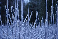 Frost by AnnikaH #animals #animal #pet #pets #animales #animallovers #photooftheday #amazing #picoftheday