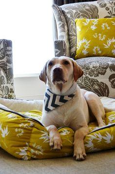 VAMOS COMBINAR | A cama do seu pet fica muito mais charmosa se combinar com a decoração! A escolha do tecido é muito importante para o conforto, resistência e higienização. #inspiracao #decoracao #pet #ficaadica #SpenglerDecor