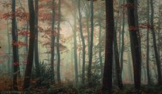 Forest atmosphere! by Patrice Thomas #xemtvhay