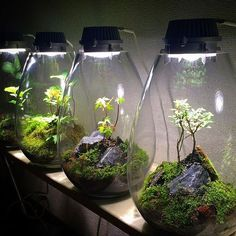 Creating a terrarium fairy garden is a fun and challenging project for all ages, sum up families, siblings, best links and solo gardeners! Terrarium Plants, Succulent Terrarium, Glass Terrarium, Terrarium Closed, Terrarium Wedding, Air Plants, Indoor Plants, Plantas Bonsai, Decoration Plante