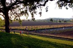The Great Outdoors Capay Valley Orchard In America S Farm To Fork Capital Sacramento Native American Proverb