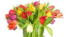 Wazon, Pięknych, Tulipanów