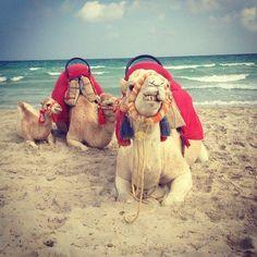 Plaża na Djerbie  Na www.tunezja.com.pl znajdziesz aktualne oferty wyjazdów, a także zarezerwujesz hotel, willę lub bilety lotnicze.