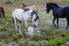 Whisp of Orange. Please stop killing our wild animals in the National parks. Horses, goats, bears. They all have a purpose and they deserve to live free.