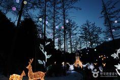 10만여 평의 정원을 밑그림 삼아 친환경 소재인 LED 전구를 사용하여 그려진 화려한 빛 축제의 장, 가평 <오색별빛정원전>