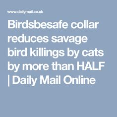 Birdsbesafe collar reduces savage bird killings by cats by more than HALF | Daily Mail Online