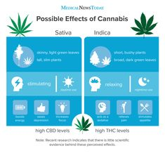 Anecdotal evidence posits that indica is more calming, while sativa is more energizing. Some experts say that such statements are misleading. Indica Strains, Cannabis Plant, Free Infographic, Medical Marijuana, Helpful Hints, Herbs, Galaxies