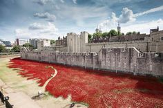 WW1 commemorative ceramic poppies. Tower of London. August 2014 -100 years.