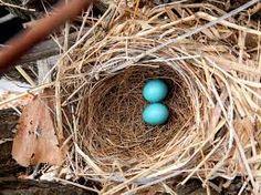 Image from http://1.bp.blogspot.com/-dKFS1PzluP0/UORtm-1glsI/AAAAAAAAAGs/00plV2hFXF8/s1600/arrow-marked+babbler+nest.jpg.