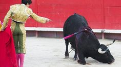 Spain. Palavas without Bullfighting - For festivities without animal cruelty