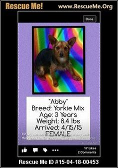 Abby (female)  Yorkie Mix    Age: Young Adult  Compatibility:	 Good with Most Dogs, Good with Adults (Not Kids)  Personality:	 Average Energy, Average Temperament  Health:	 Needs to be Spayed       Please call the shelter for additional information. 256-304-0474   Adoption Fee: $ FEEAnimal Location:  DeKalb County Animal Adoption Center 2601 Jordan Road DeKalb County Ft. Payne, AL 35968 MAP IT!  Contact:	 Lesley Spurgin lesleyspurgin@gmail.com Shelter# 2563040474