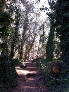 Grove Trail heading into the Butterfly Grove in Goleta, California.