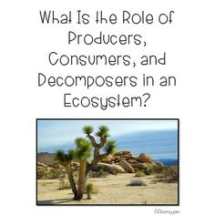 What Is the Role of Producers, Consumers, and Decomposers in an Ecosystem?