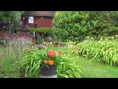 Down the Lane 23rd.July 2013 - YouTube. A video clip of the Garden in Summer