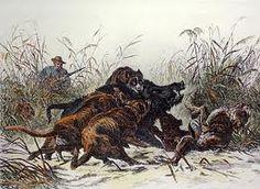 Boar hunting Boar Hunting, Hunting Art, Hunting Dogs, Feral Pig, Wild Hogs, Hunting Magazines, Hog Dog, Outdoor Art, Wildlife Art