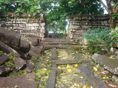 Path leading to palace entrance on one of Nan Madol's manmade islands. Continent of Mu (Lemuria)