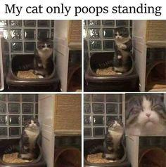 Cato no seato when shito