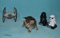 ~Tails from the Foster Kittens~: Wordless Wednesday - May the Fourth..