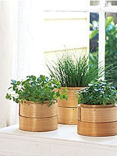 Google Image Result for http://www.atypicaltypea.com/wp-content/uploads/2011/09/Bamboo-steamer-herb-pots.jpg
