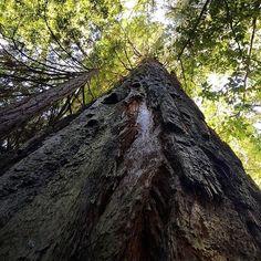 Caliparks Big Basin Redwoods, Central California, Local Parks, Park Photos, Park City, State Parks, Travel, Instagram, Trips