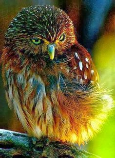 (disambiguation) Wildlife includes all non-domesticated plants, animals, and other organisms. Wildlife or Wild Life may also refer to: Exotic Birds, Colorful Birds, Beautiful Owl, Animals Beautiful, Beautiful Images, Simply Beautiful, Pretty Birds, Love Birds, Animals And Pets