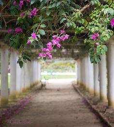 Jardim Botânico, RJ