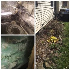 Basement Mold Removal #roc #rochesterny #mold #moldremoval #wetbasement