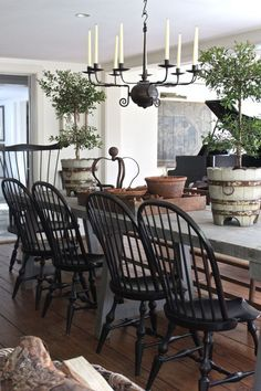 Rustic French table with American windsors painted black...and love the big pots w/ topieries