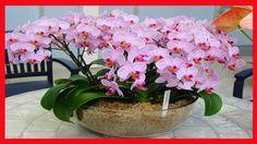 Como Fazer Sua ORQUIDEA dar Flor? 3 Dicas Fantásticas que Essas Flores P...