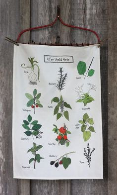 """A few useful herbs"" tea towel with original art by Alice Cantrell's daughter. As seen on Melissa Wiley's page."