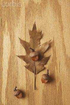 Acorns and a leaf.