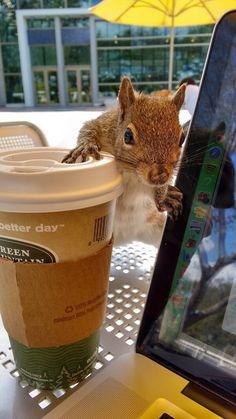 I'll Have A Short Half-Caf Grande Venti Trenta…