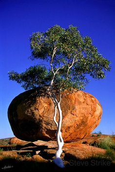 Ghost Gum Tree and Devil's Marbles, Northern Territory in Australia What A Wonderful World, Beautiful World, Beautiful Places, Outback Australia, Australia Travel, Dame Nature, Natural Wonders, Amazing Nature, Wonders Of The World