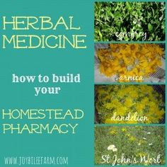 how to build your homestead pharmacy ~ JoybileeFarm giving them access to the herbs that grow abundantly and seeding more herbs to help them heal themselves.  Animals that are given access to a wide variety of herbs, will self medicate and balance their own health