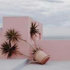 'Tired palm tree' a pastel vision captured in #Calpe #Spain by photographer…