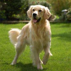 C'est un chien comme celui-là que je voudrais ! ========================= Bonjour, pour les bijoux Gaby Féerie => http://www.alittlemarket.com/boutique/gaby_feerie-132444.html