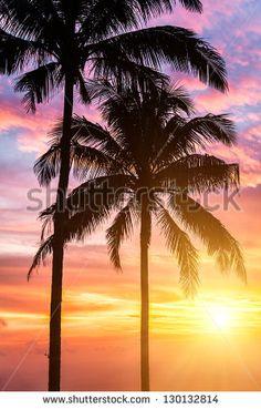 Two palms and beautiful sunset