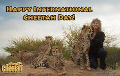 International Cheetah Day Cheetah Conservation Fund www.cheetah.org
