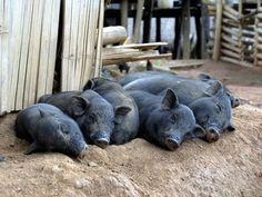 Sleeping animals 15