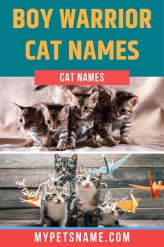 Warrior Cat Names: A List of Fiery Names For Clan Leaders Male Pet Names, Boy Cat Names, Kitten Names, Warrior Cat Names, Ancient Greek City, Greek Names, Cat City, Little Boys, Kittens