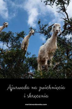 Blog, Animals, Animales, Animaux, Animal Memes, Animal, Animais, Dieren