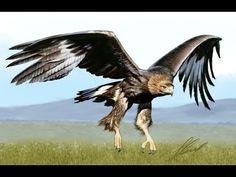Рисуем птицу - Орёл(Беркут)/Eagle(Aquila chrysaetos) - YouTube