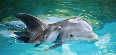 El amor de mama delfin con su bebe