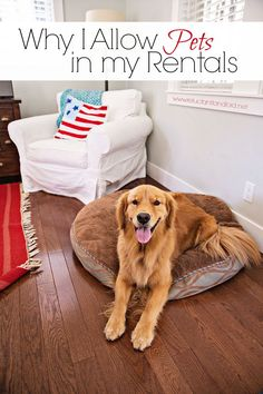 Do you think pets in rentals should be allowed? Here's 4 benefits to allowing pets in rentals and why you should! Income Property, Rental Property, Investment Property, Real Estate Business, Real Estate Investing, Real Estate Marketing, Real Estate Rentals, Real Estate Tips, We Buy Houses
